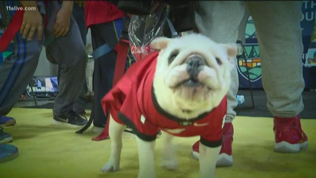 Fans pour in for National Championship game