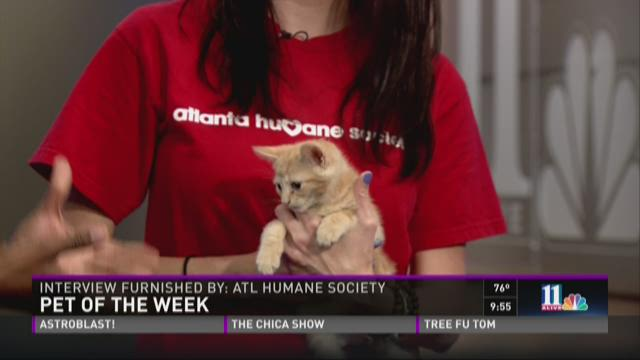 Pet of the Week: June 27