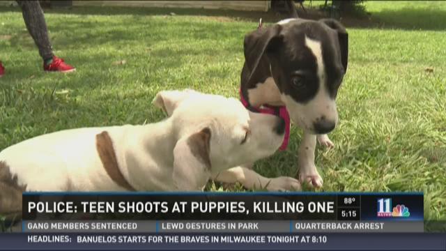 Police: Teen shoots at puppies, kills one