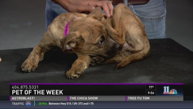 Pet of the Week: August 1