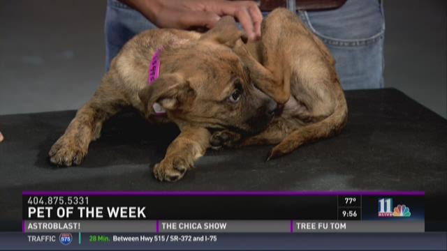 Pet of the Week: August 1