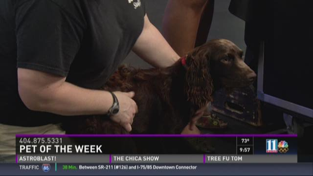 Pet of the Week: August 29
