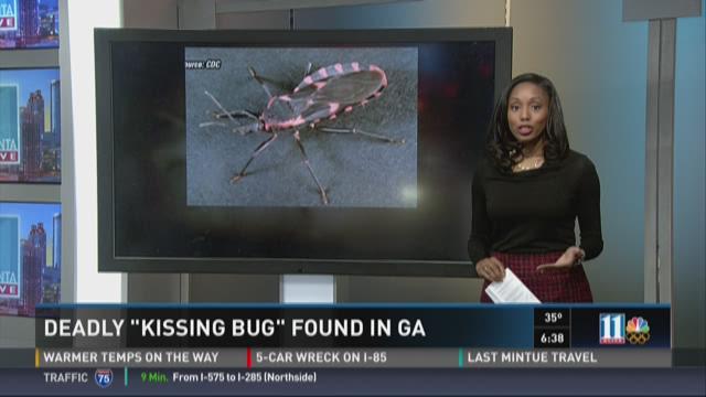 PHOTOS: Deadly 'kissing' bug