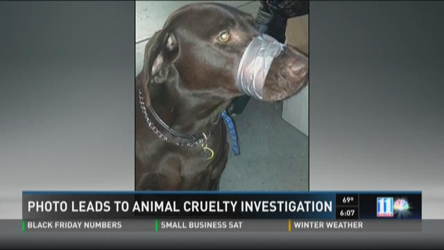 Photo leads to animal cruelty investigation