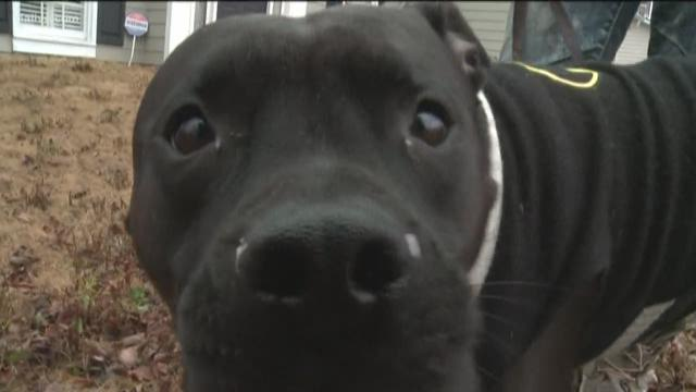 Pit bull's instincts lead him to rescue elderly woman in pond